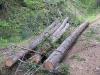 Log Skidding
