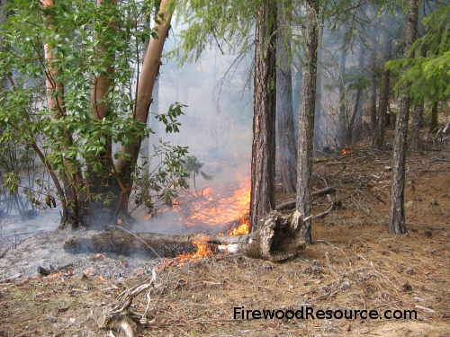 Prescribed Burn Cleans the Forest Floor