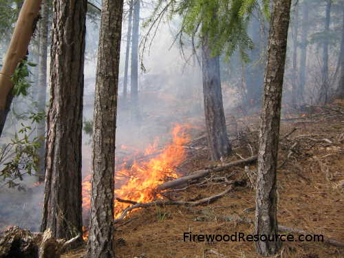 Controlled Fire Intentionally Set by Foresters