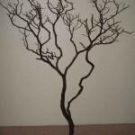 Manzanita Branch