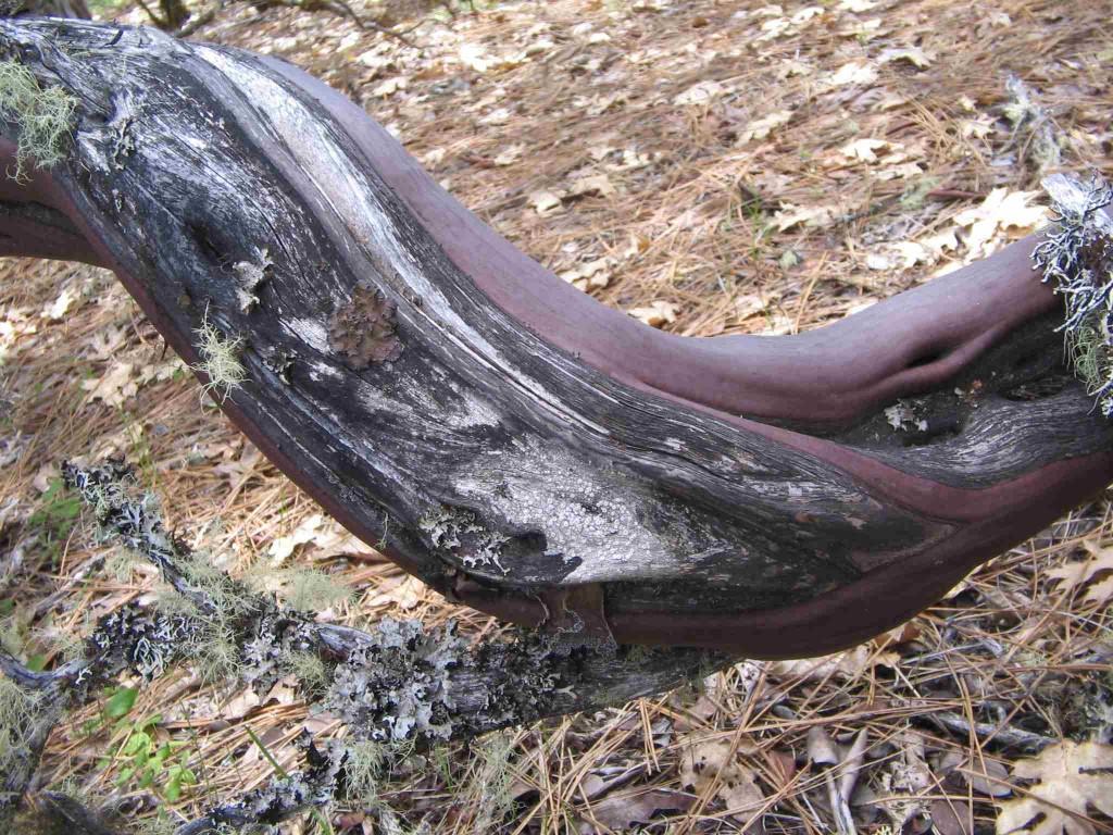 Manzanita Wood